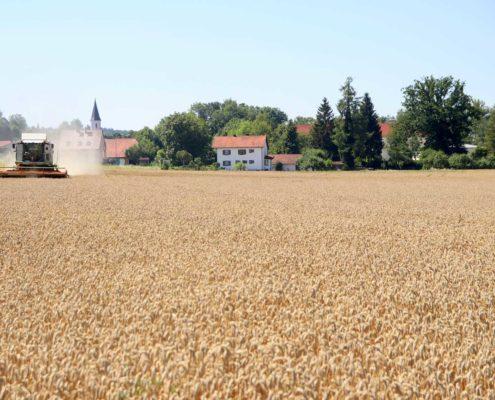 Ernte Wasserschutz-Weizen des Landwirts Franz Strixner
